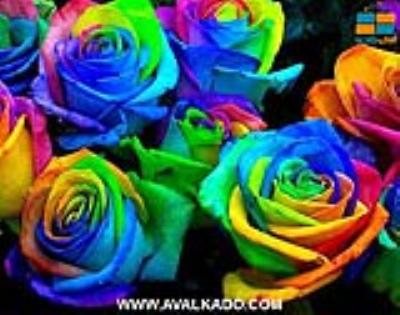 ٩ رنگ در گلها که معنی خاصی را بیان می کند