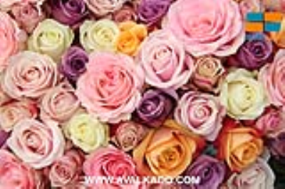 معنی تعداد گل ها برای هدیه دادن